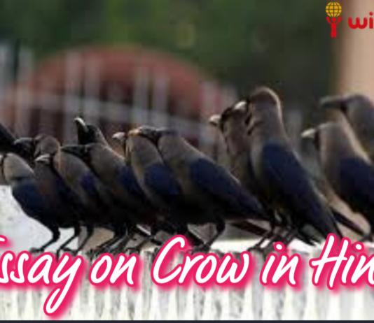 कौआ पर निबंध, Essay on Crow in Hindi, , hindi essay, Short Essay on Crow in Hindi , Kaua par Nibandh, निबंध, hindi nibandh, कौए पर निबंध , Easy Essay on Crow in Hindi, Hindi essay writing, Crow Essay in Hindi, कौवा पर निबंध , About Crow in Hindi , कौआ के बारे में बताइए, Five lines or kids hindi essay on Crow, Ten lines or kids hindi essay on Crow, 5 lines or kids hindi essay on Crow, 10 lines or kids hindi essay on Crow, कौआ पर 10 लाइन, कौए पर दस लाइन, कौवा पर 10 लाइन, कौआ पर दस लाइन, कौए पर 10 लाइन, कौए पर निबंध, कौवा पर दस लाइन, कौआ पर निबंध कैसे लिखें, crow, कौआ, कौए, कौवा, क्रो, Hindi Pitara,Hindi Vyakran, hindi yatra, wikiluv, विकिलव, wikiluv.com, www.wikiluv.com, class 1st ka essay in hindi, class 1st easy 10 line essay on crow in hindi, 12th class essay on crow in hindi, 10th class essay on crow in hindi, 11th class essay on crow in hindi,5th class essay on crow in hindi, 7th class essay on crow in hindi, 8th class essay on crow in hindi, 9th class essay on crow in hindi, 6th class essay on crow in hindi, 4th class essay on crow in hindi, 3rd class essay on crow in hindi, 2nd class essay on crow in hindi, 1st class essay on crow in hindi, कौए (कौआ) पर निबंध,10 Line Essay on Crow in Hindi कौआ पर दस लाइन,कौआ पर निबंध आसान शब्दों में, आसान शब्दों में कौआ पर निबंध, कौवा पर निबंध, easy 10 Line Essay on Crow in english, 10 Line Essay on Crow in English,10 essay on crow, 10 Line Essay on Crow in hindi & english,